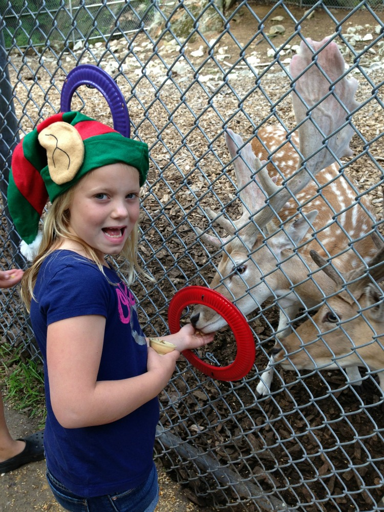 Kids loved feeding Reindeer