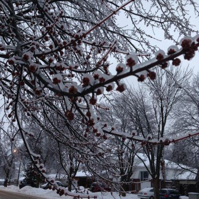 "Ice Storm 2013 – Gave Me The Best ""I Told You So"""