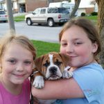 A Boxer, A Cockatoo and now a Bulldog Puppy – We're Complete