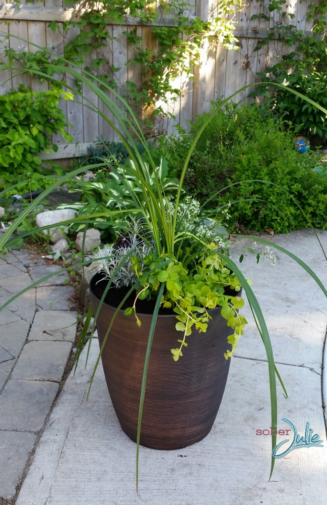 How to Make a Gorgeous Planter 2