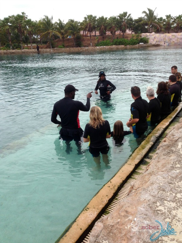 interacting with dolphins at atlantis