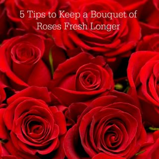 5 Tips to Keep a Bouquet of Roses Fresh Longer slider
