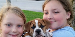 A Boxer, A Cockatoo and now a Bulldog Puppy - We're Complete
