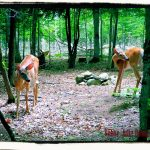 Wordfull Wednesday – Stalking Deer
