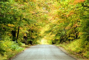 Road covered with Autumn trees