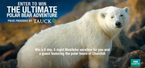 bbc_ultimate_polar_bear_adventure