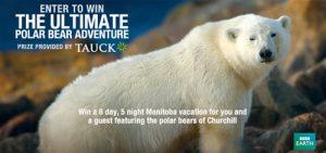 bbc_ultimate_polar_bear_adventure