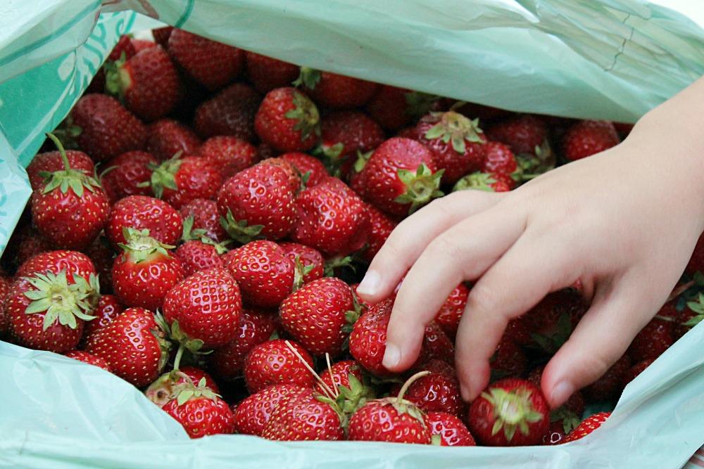 Fresh strawberry milkshake