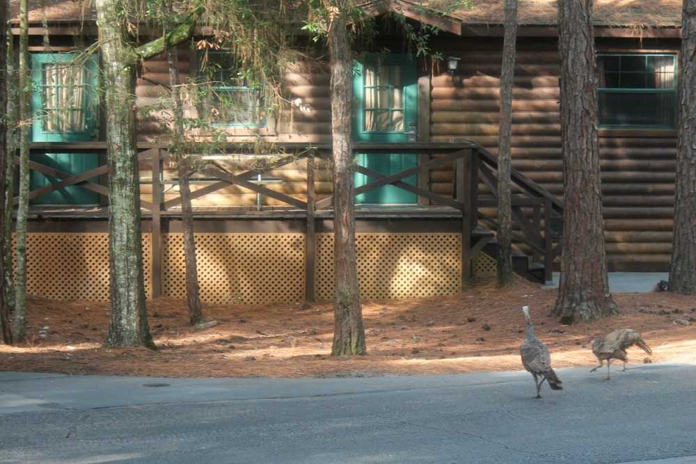 Disney Fort Wilderness Turkey