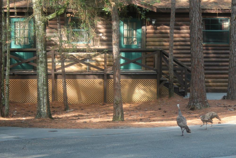 Disney Fort Wilderness Turkey