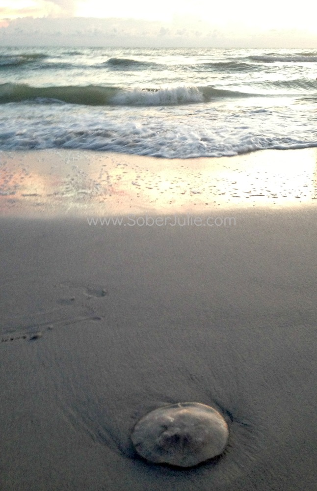 tradewinds jellyfish