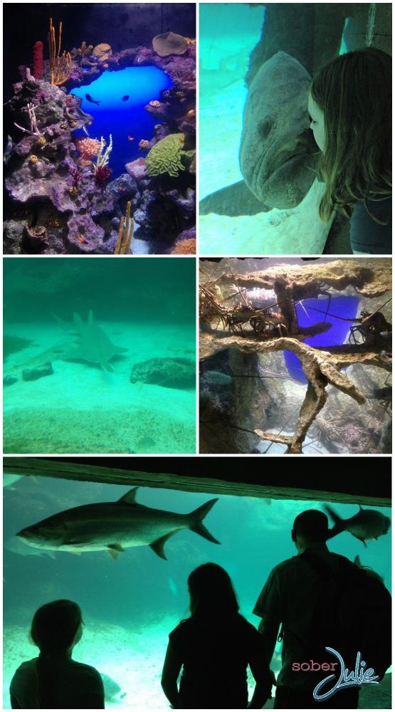 Atlantis Resort Aquaventure the dig underwater.jpg
