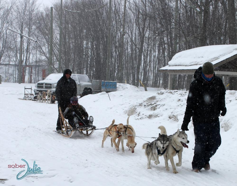 Fern Resort Dogsledding