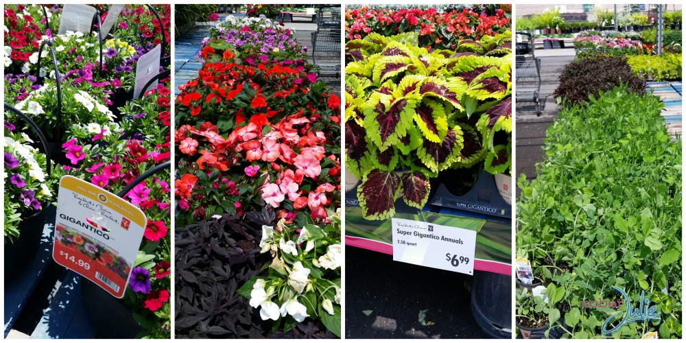 shopping for plants at Zehrs