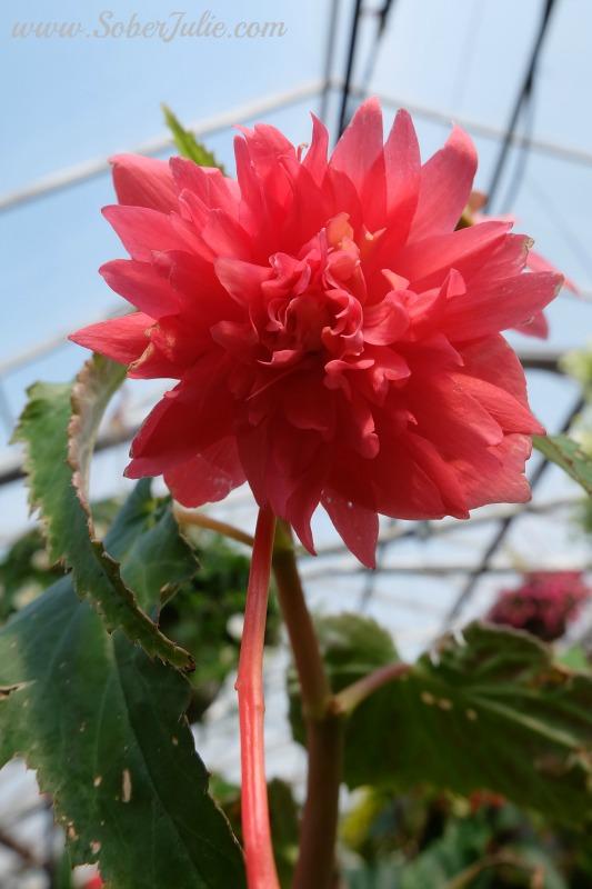 soberjulie-fuji-x-a2-review-macro-flower
