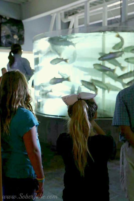 aquarium new brunswick