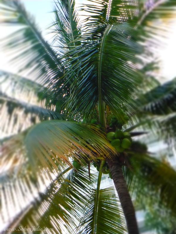 fujifilm palm tree