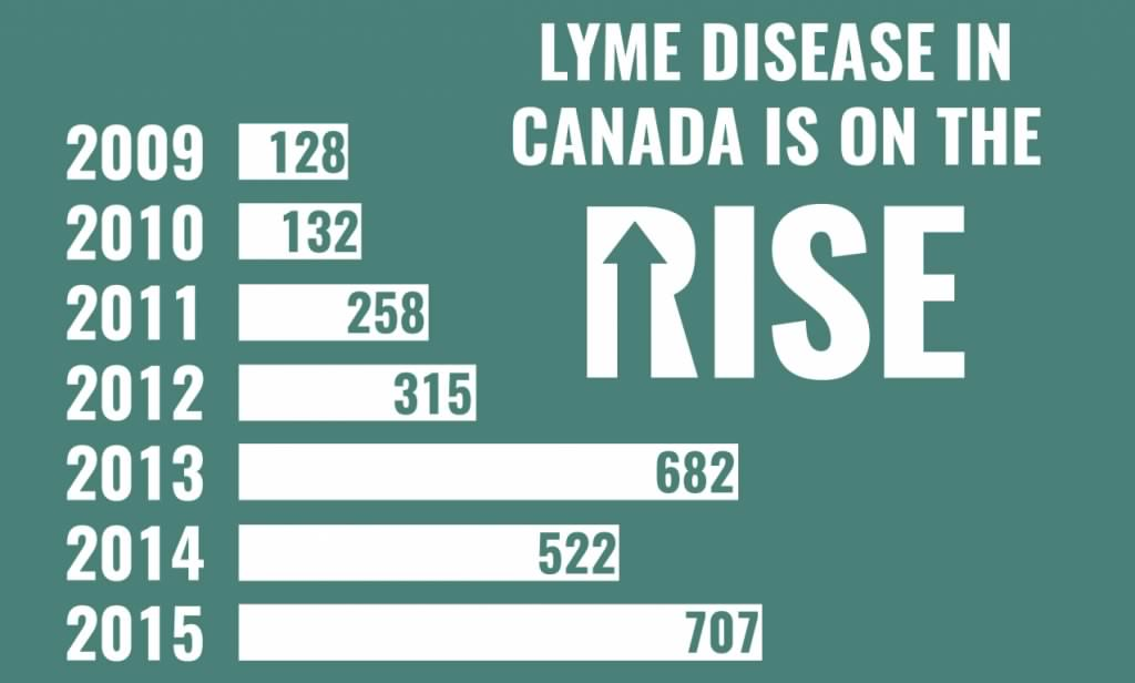 lyme-on-the-rise-1024x616