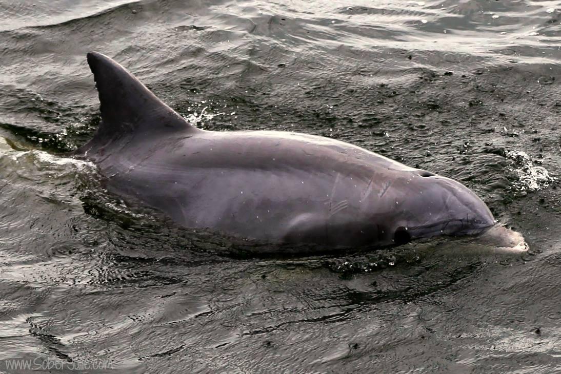 dolphin florida ocean