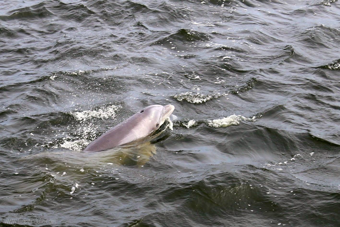 dolphin florida