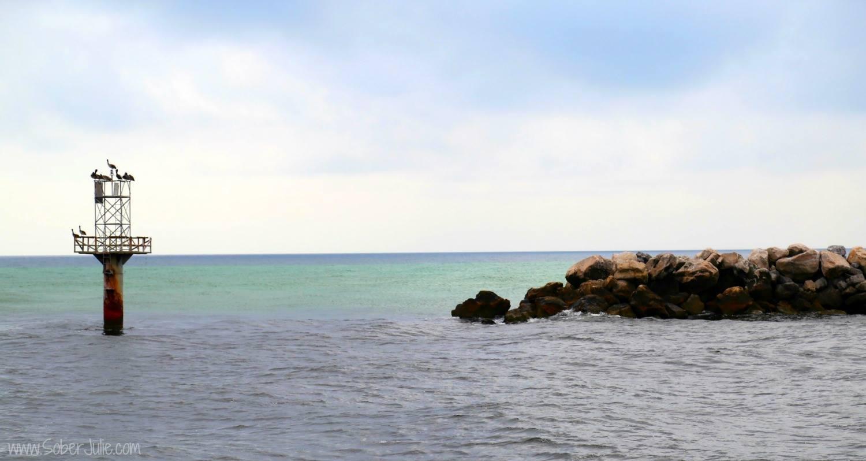 dolphin tour florida landscape